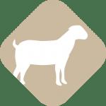 icnos-ovino-grupo-sanchiz